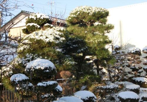 Japanese snow fallen garden